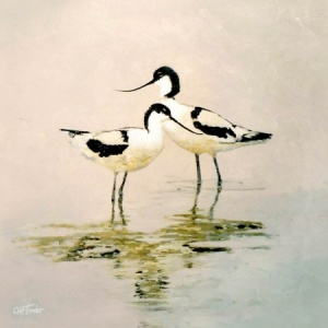 800x800pxs_2_avocets_8x8_canvas_