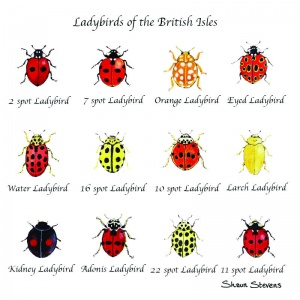 ladybirds_of_the_british_isles_copy