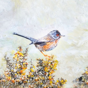 800x800_dartford_warbler_20x20cm_canvas