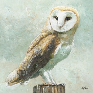 800x800_pixs_barn_owl_2_for_8inx8in_stretcher_1959226320