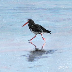 800x800_pxs_oystercatcher_for_8inx8in_stretcher
