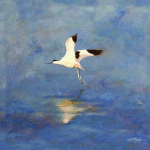 800x800pxs_avocet_in_flight