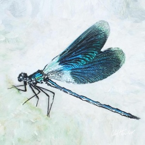 damselfly_for_200x200_canvas