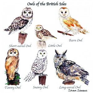 owls_of_the_british_isles