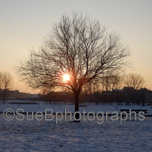 sunset_through_the_tree